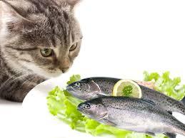 pesci alimentazione il pesce gatti alimentazione