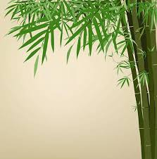 Bamboo Print Shower Curtain Antique Bamboo Print Shower Curtain Kawelamolokai Com