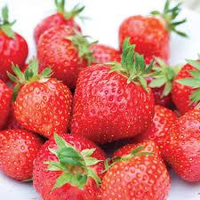 strawberry u0027irresistible u0027 em1294 mid season thompson u0026 morgan