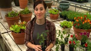 plant delivery burpee garden ready plants delivery explained
