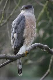 listbirds 66 best wildlife of van vorst park images on pinterest life list