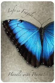 93 best blue butterflies images on pinterest butterflies
