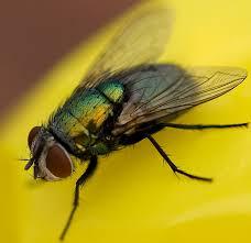 Flies In Backyard Fly Control How To Get Rid Of U0026 Keep Flies Away Fly Killer Poison