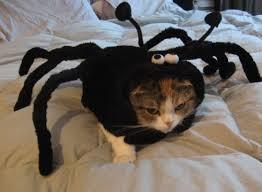 Small Puppy Halloween Costumes Pet Costumes Halloween Google Dog Halloween