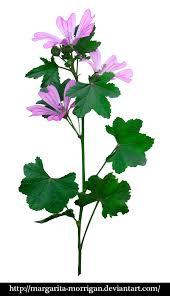 margarita png flowers bluebells2 by margarita morrigan on deviantart