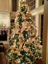 trees decorated with mesh netting is an