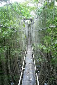 Under Canopy Rainforest by Rain Forest Bridge In Western Samoa Favorite Places U0026 Spaces