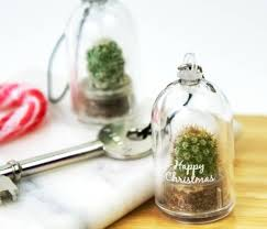 terrariums u0026 indoor cloches curated collection from gardenista