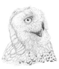 wildlife drawings u2013 birds by stuart fowle