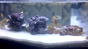 coffee table aquarium saltwater coffee table aquarium youtube