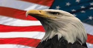 America Eagle Meme - america the beautiful gif