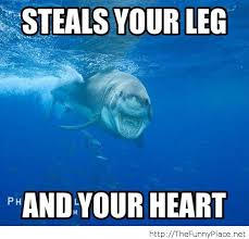 Jaws Meme - shark memes shark dreams memes pinterest shark memes and
