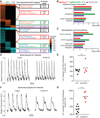 kmt2d regulates specific programs in heart development via histone