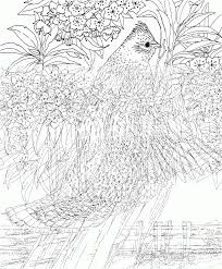 100 difficult printable coloring pages birds coloring pages