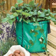 vegetable container gardening tips home outdoor decoration