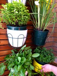 what plants grow best on a balcony garden my productive
