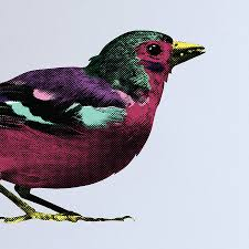 pop art sparrows wall stickers by the binary box pop art sparrows wall stickers