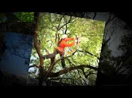 phillips tree service