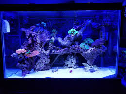 Reef Aquascape Designs Aquascapes Exotic Reef Designs