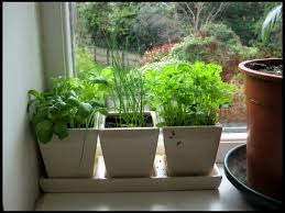 home decor small indoor herb garden image of indoor herb