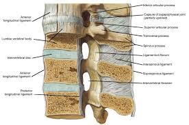 parts of spine lencadrier com
