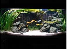 Aquascaping World Cichlid Tank Design Picture And Images