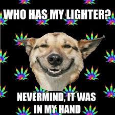 Stoned Dog Meme - fuck im high stoner dog an internet meme about being high