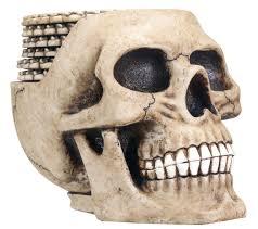 amazon com skull coaster set 6 coasters collectible skeleton