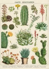 Amazon Succulents Amazon Com Cavallini U0026 Co Cacti U0026 Succulents Decorative Paper Sheet