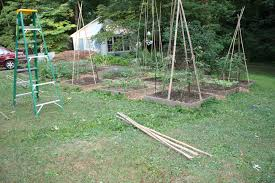 bamboozling how to build a bamboo trellis u2013 let u0027s face the music