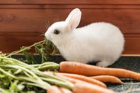 rabbit food best rabbit food top choices for 2018 rabbit expert