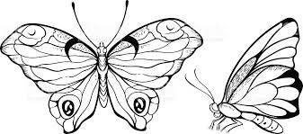 top and side view of butterfly stock vector more images of