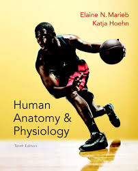 Human Anatomy And Physiology Case Studies Marieb U0026 Hoehn Human Anatomy U0026 Physiology 10th Edition