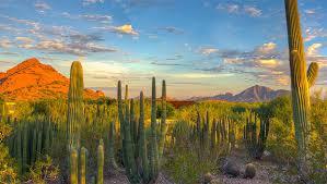 Scottsdale Botanical Gardens Desert Botanical Garden Desert Botanical Garden
