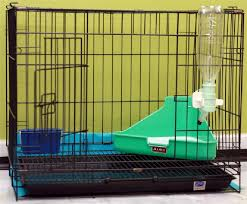 Rabbit Hutch Set Up To Do List Before Bringing Bunny Home Timothy Chan Petfinder