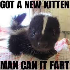 Fart Meme - got a new kitten man can it fart meme guy