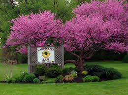 Landscape Syracuse Ny by Central Ny Landscape Experienced Certified Contractors Syracuse
