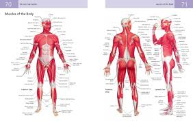 Anatomy And Physiology Chapter 11 Test The Anatomy Student U0027s Self Test Visual Dictionary An All In One