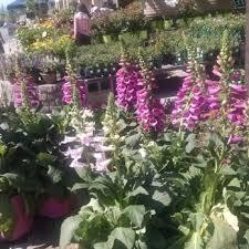 Flower Shops In Snellville Ga - lowe u0027s 29 photos u0026 16 reviews building supplies 1615 scenic