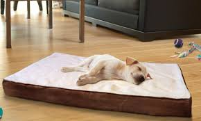 how to clean your pet beds easily 101 days of organization
