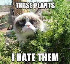 Tardar Sauce Meme - grumpy cat gardening meme these plants i hate them garden on