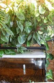 plant walls gardening and the science of aquaponics u2013 nori u0027s stuff