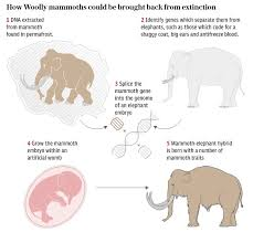 cloning woolly mammoths global warming u2013 u0027s connection