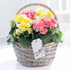 mothers day plants s day plants with free delivery