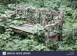 Rustic Wooden Bench Overgrown Rustic Wooden Bench Seat Covered In Brambles And Other