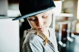 pet geckos for beginners types of geckos