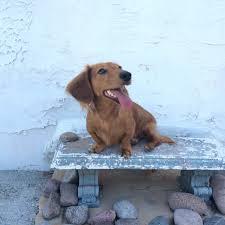 best dog wash in san diego u2013 that california style