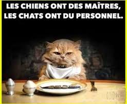 Meme Chat - chien et chat meme by bloodydeath101 memedroid