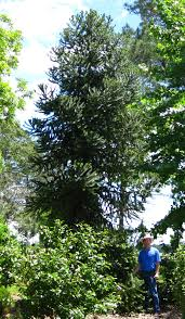 Types Of Garden Trees Gardens Of The Big Bend A New Botanical And Teaching Garden In
