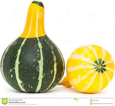 ornamental gourd royalty free stock image image 34193286